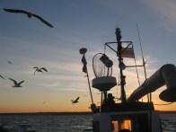 Early morning in Lithuanian Baltic Sea on board gillnet vessel © Marguerite Tarzia/BirdLife International