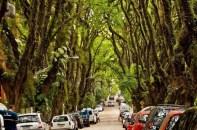 Rua-Gonçalo-de-Carvalho_1