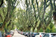 Rua-Gonçalo-de-Carvalho_7