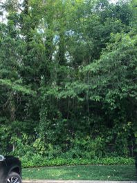 Typical Wood Long Island Lot Overrun With Invasives