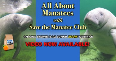 All About Manatees with Save the Manatee Club