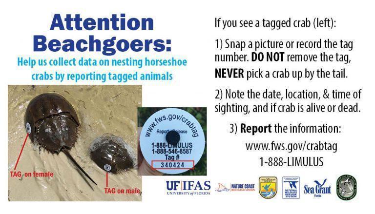 Florida Horseshoe Crab Watch - Linked with Limulus