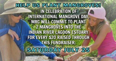 Help Us Plant Mangroves on Saturday, July 25, 2020