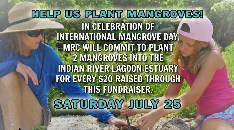 Help Us Plant Mangroves on Saturday, July 25, 2020