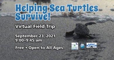 Virtual Field Trip - Helping Sea Turtles Survive!