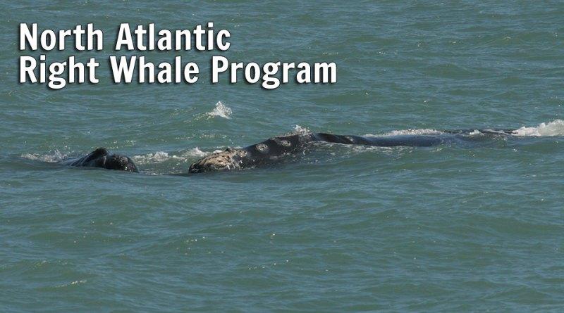 North Atlantic Right Whale Program