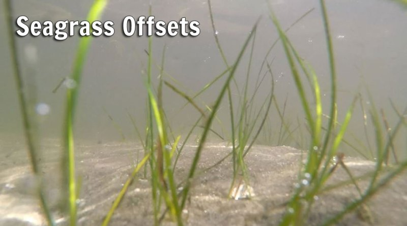 Seagrass Offsets