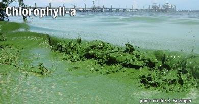 Chlorophyll-a
