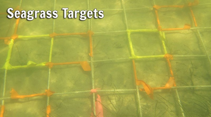 Seagrass Targets