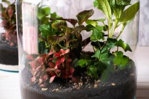 Zelf een ecosysteem maken | DIY pakket