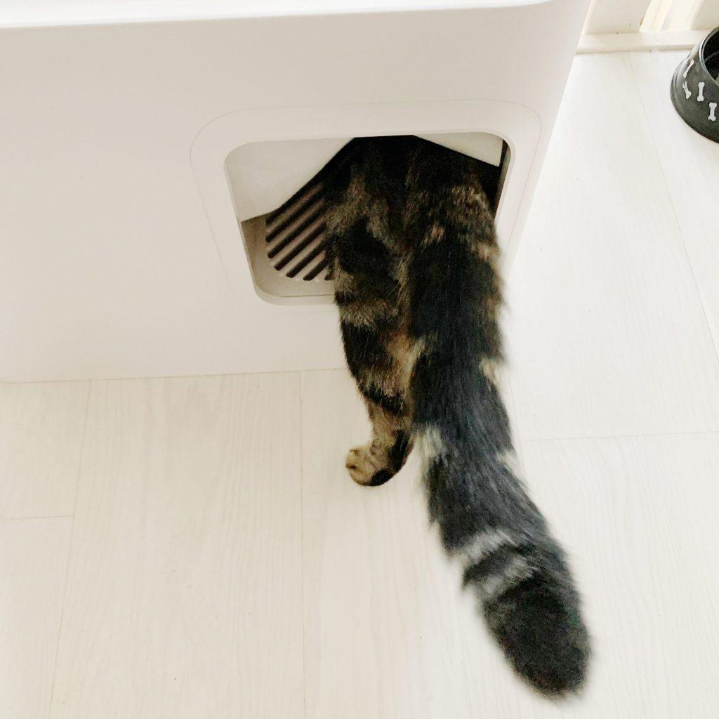 Kattenbak, voor elke kat een eigen bak + review