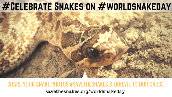 world-snake-day-hognose.png