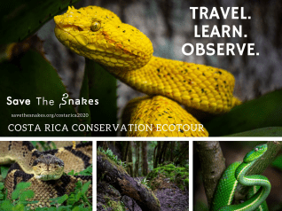 Experience Costa Rican Reptiles On The Save The Snakes Ecotour Save The Snakes