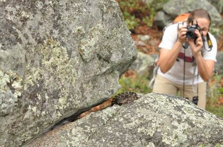 Melissa photographing Alice and her babies (Arizona black rattlesnakes), photographed by Jeff Smith.