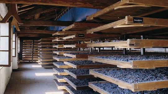 Dolce Vita : 4 vins rouges italiens de légende