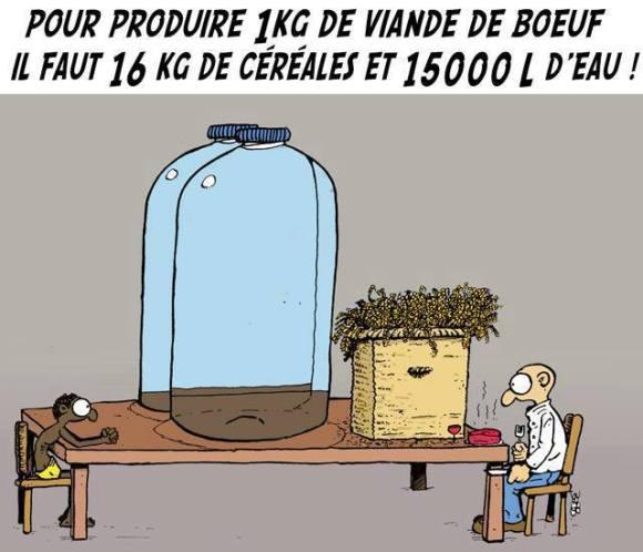 éco-boeuf-eau