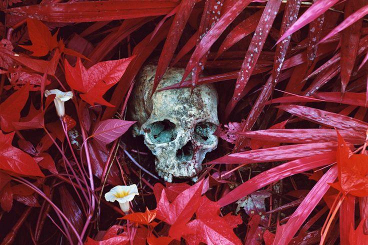 Photographer Richard Mosse: The Enclave Exhibition