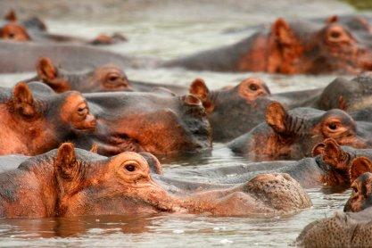 Virunga - Lake Edward http://whc.unesco.org/uploads/activities/documents/activity-83-2.jpg