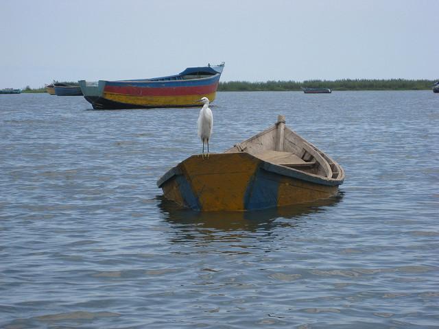 Jocelyn Saurini semiliki_105 Bird on a boat in a pretty, colorful picture.
