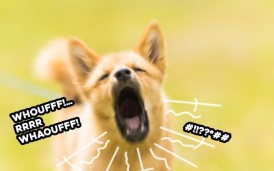 Stop aux aboiements ! Mon chien aboie sans cesse !