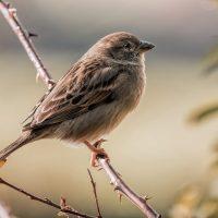 Vögel, von Manfred Schmidt