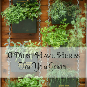 10 Must-Have Herbs For Your Herb Garden