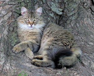 outside cat