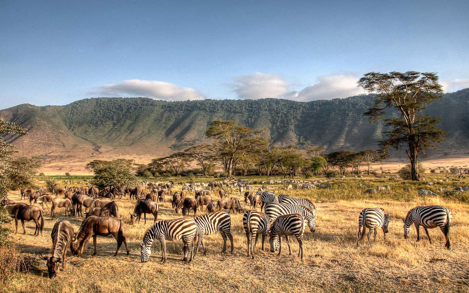 Win an All-Inclusive 5-Day Trip to Tanzania