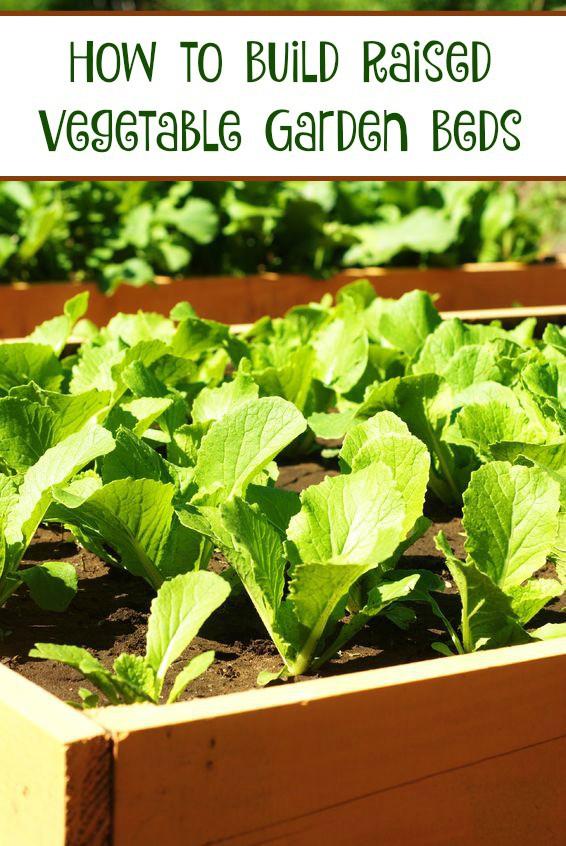 How Make Raised Veggie Garden