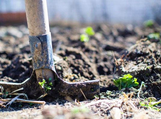 Save money with gardening this spring