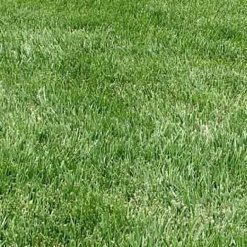 fertilized grass