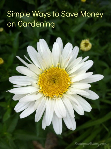 Simple Ways to Save Money Gardening | Saving Our Money