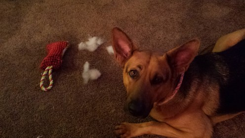 And New Stuffie (already destroyed)