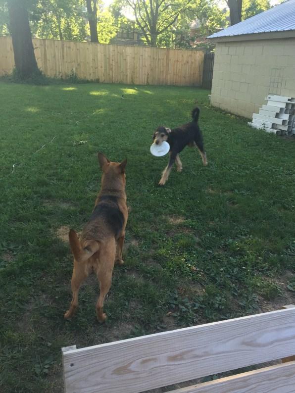 Sammie watching her puppy.