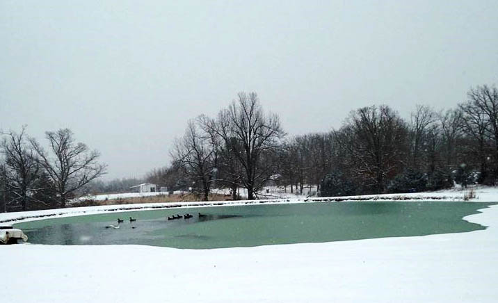 Geese on an icy pond surrounded by snow and trees in Missouri.
