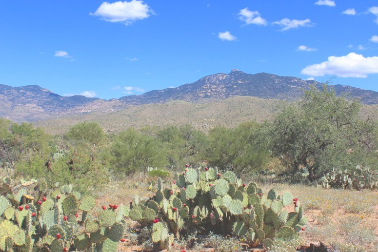 View of Rincon Mountain in Saguaro National Park