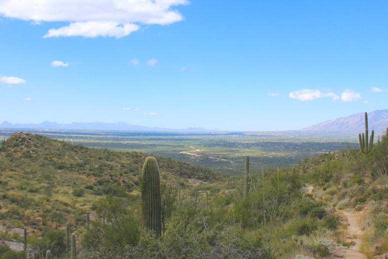 Views of Tucson from Saguaro National Park East