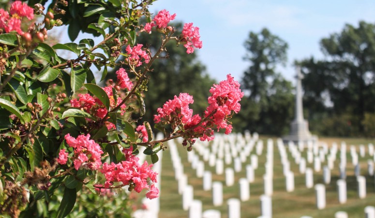 Washington DC / Arlington Cemetery