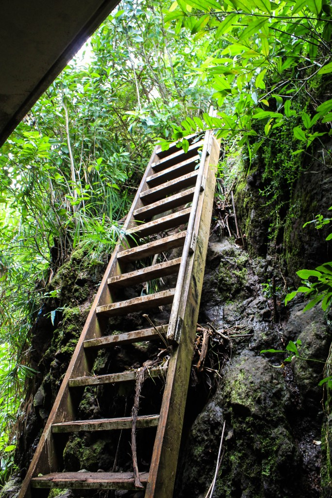Hiking trail to Old Pali Highway Oahu Hawaii