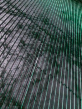 green-corregated-wall-with-tree-silohette-at-yerba-buena-center-for-the-arts-copy