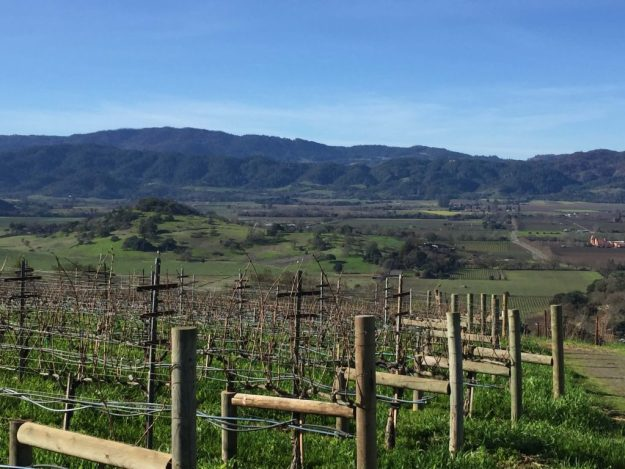 Napa Dalle Valle Vineyards