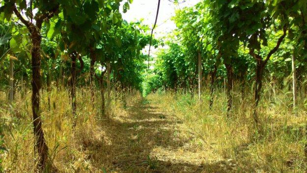 Puglia Italy wine L'Archetipo