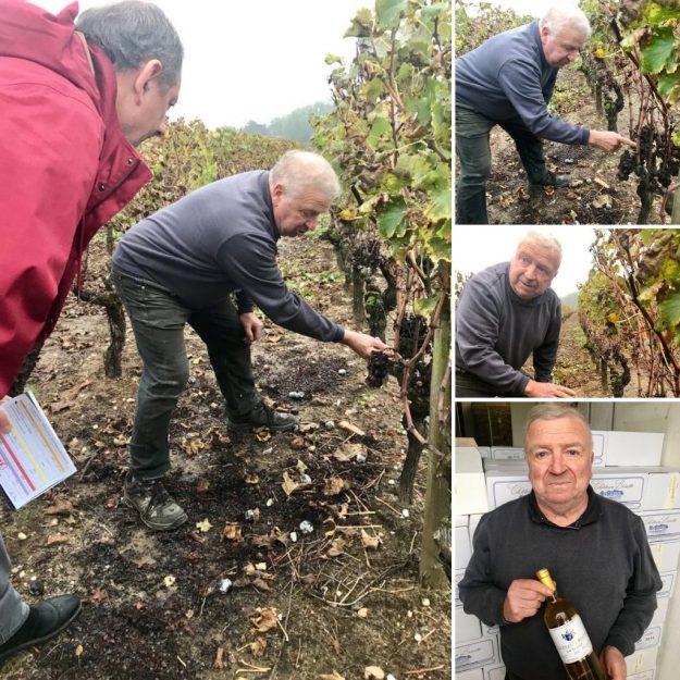 Chateau Briatte Sauternes sweet wine