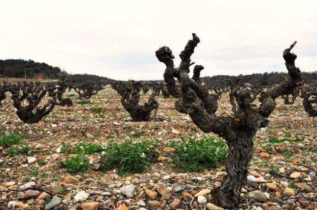 Roussillon clay pebbles argilo soils