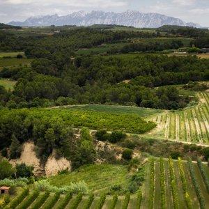 Catalonia D.O. Cava vineyards