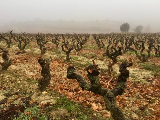 Spain vineyard Ribera del Duero