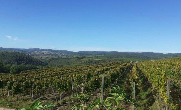 Kamptal DAC Loiserberg vineyard Austria