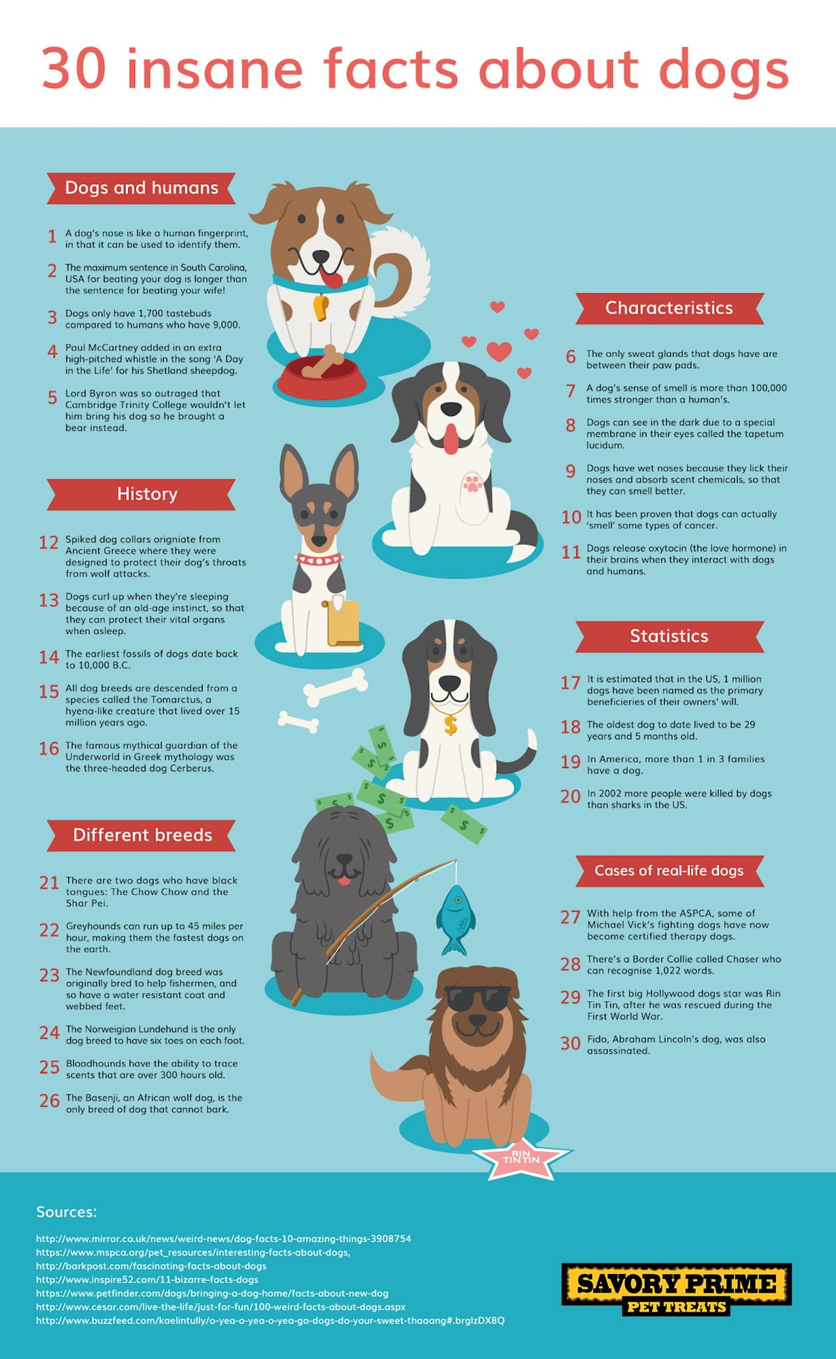 30 Insane Facts About Dogs