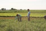 A pair of pea pickers enjoying Edgar Farms photo - Karen Anderson