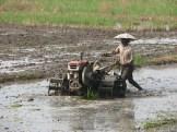 rice farmer - photo - Karen Anderson